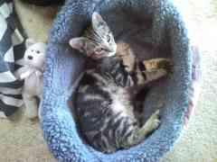 Winky in her little bed